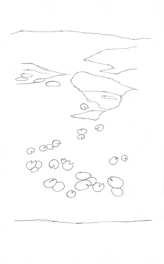 A sketch of a pond filled with water lilies and algae. Drawn with pencil on paper.